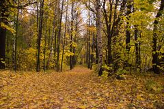 Deserted path in deciduous autumn park Royalty Free Stock Photo