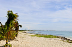 Deserted and peaceful beach. Caribbean deserted beach on the Riviera Maya Stock Images