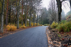 A deserted road in an autumn park. Stock Images