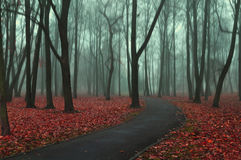 Deserted road in the autumn park in misty weather Stock Images