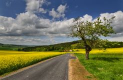 Deserted road. Deserted country road on a sunny spring day Royalty Free Stock Photos