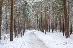 Deserted road through the winter, evening forest. Russia stock photography