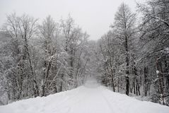 Deserted road in winter forest. Russia after snowfall, beautiful nature, snowfall in Moscow, snowstorm, lots of snow, snowy winter Stock Photo