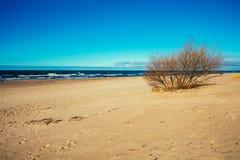 Deserted sandy beach Stock Images