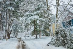 A deserted street in a small American town, covered with snow. beautiful large coniferous trees in the snow. Sako. USA. Maine Stock Image