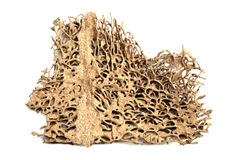Deserted termite nest Royalty Free Stock Photography