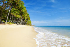 Deserted tropical beach with palm trees Stock Photos