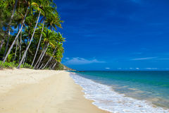 Deserted tropical beach with palm trees in north Queensland Stock Photos