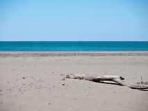 Deserted unspoilt beach with driftwood Royalty Free Stock Photos