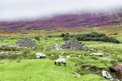 Deserted Village Ruins on Achill Island. The Deserted Village at Slievemore consists of some 80 – 100 stone cottages located along a mile long stretch of road royalty free stock image