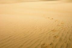 desertera den avlägsna jätten för dynen som looks nya norr zealand Norr Nya Zeeland Royaltyfria Bilder