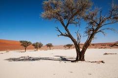 desertera namib Royaltyfri Fotografi
