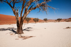 desertera namib Fotografering för Bildbyråer