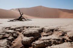 desertera namib Arkivbild