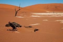 desertera namib Royaltyfri Foto