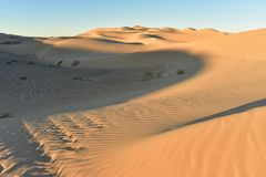 Desertera sanddyn på imperialistiska sanddyn, Kalifornien, USA Arkivfoton
