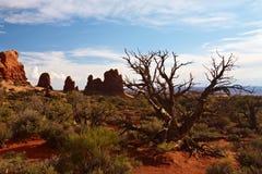 desertera treen Royaltyfria Bilder