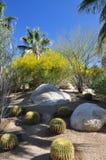 Desertera växter Arkivfoton