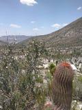 Desertic landscape Stock Images