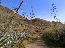 Desertic walk Royalty Free Stock Photo