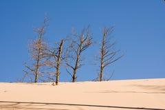 Desertificación Foto de archivo