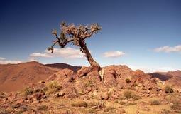 Desertification Royalty Free Stock Photo