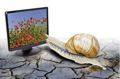 Desertification. This image shows a snail on a dry land, trying to get into a screen showing an image of poppies in spring Royalty Free Stock Photo