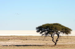 Desertification Royalty Free Stock Photo