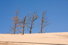Desertification Stock Photo