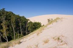 Desertification. Sand dunes eating up forest Stock Image