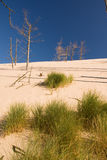 Desertification. Sand dunes eating up forest Royalty Free Stock Photography