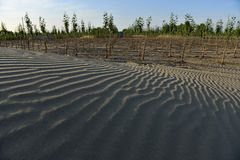 Desertification control Stock Photography