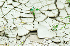 Desertification. Plants coming out of a dry ground Royalty Free Stock Photo