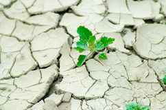Desertification. Plants coming out of a dry ground Royalty Free Stock Photography