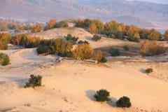 Desertification prairie and autumn trees Stock Photos