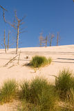 Desertification process. Sand dunes eating up forest Royalty Free Stock Photos