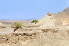 Deserto árabe da vista, foto de stock