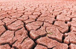 Deserto árido vermelho com brotar a grama e as quebras foto de stock royalty free