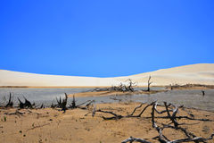 Deserto Fotos de Stock Royalty Free