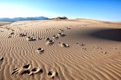 Deserto Imagens de Stock