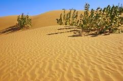 Deserto Fotografie Stock