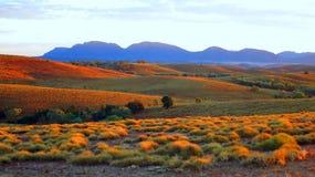 Deserto in Australia fotografia stock