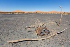 Deserto beduino vicino ai sanddunes di Merzouga, Marocco fotografia stock libera da diritti