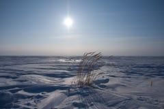 Deserto bianco immagine stock