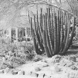 Deserto in bianco e nero Fotografia Stock Libera da Diritti