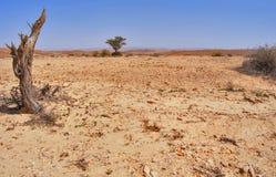 Deserto biblico immagine stock libera da diritti