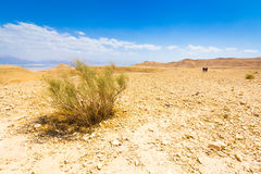 Deserto Bush Immagini Stock
