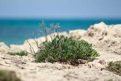 Deserto Bush Imagem de Stock Royalty Free
