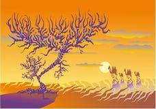 Deserto caldo Immagine Stock