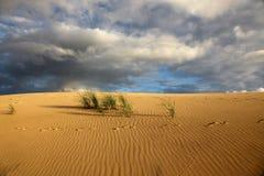 Deserto com as trilhas na areia Foto de Stock Royalty Free